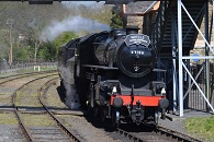 Steam train weedfree 2015 195x130